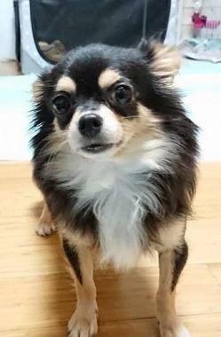 f:id:dog_life_saving:20181102141833j:image