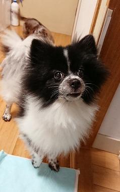 f:id:dog_life_saving:20181102141836j:image