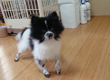 f:id:dog_life_saving:20181102141837j:image