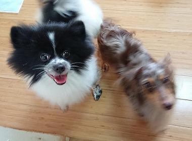 f:id:dog_life_saving:20181102141838j:image