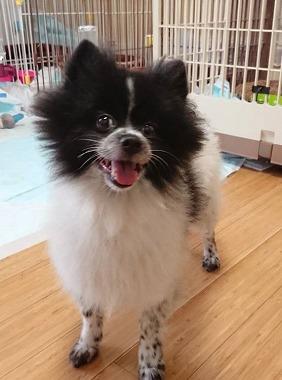 f:id:dog_life_saving:20181102141839j:image