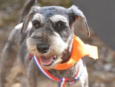 f:id:dog_life_saving:20181105141747j:image