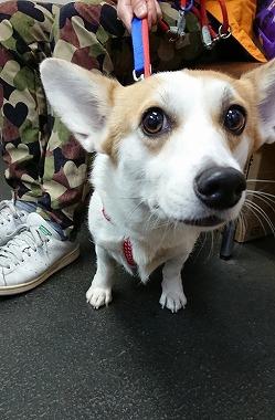f:id:dog_life_saving:20181105142309j:image