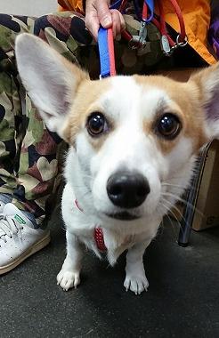 f:id:dog_life_saving:20181105142313j:image