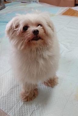 f:id:dog_life_saving:20181106134911j:image