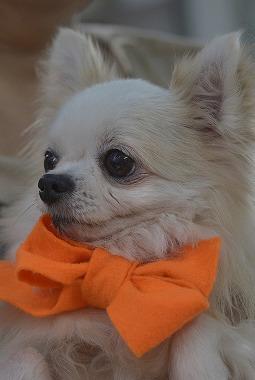f:id:dog_life_saving:20181109153014j:image