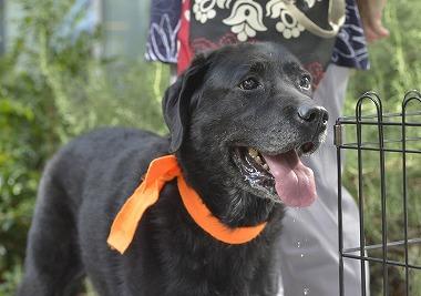 f:id:dog_life_saving:20181109153016j:image