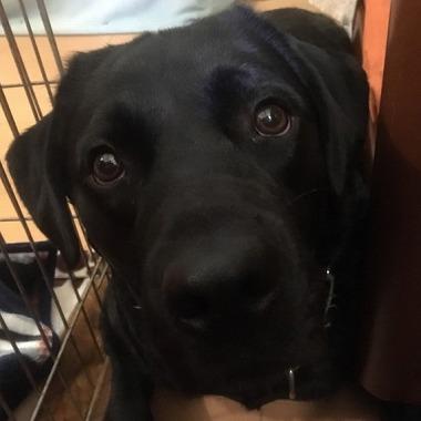 f:id:dog_life_saving:20181128153650j:image