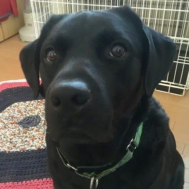 f:id:dog_life_saving:20181128153653j:image