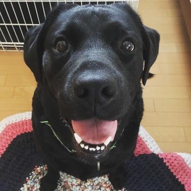 f:id:dog_life_saving:20181128153656j:image