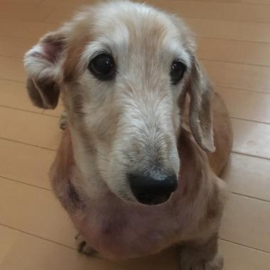 f:id:dog_life_saving:20181128153729j:image