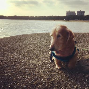 f:id:dog_life_saving:20181128153735j:image