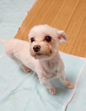 f:id:dog_life_saving:20181225150006j:image