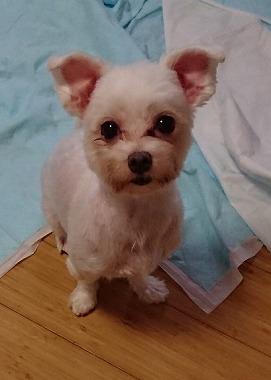 f:id:dog_life_saving:20181225150007j:image