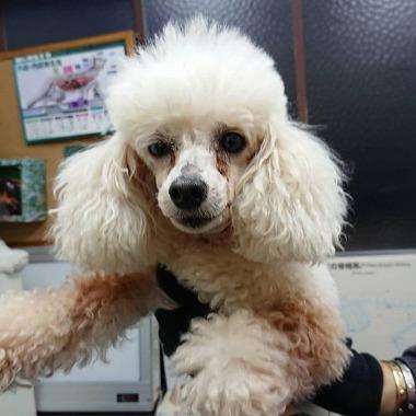 f:id:dog_life_saving:20181225150012j:image