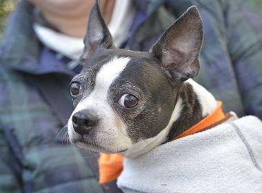 f:id:dog_life_saving:20181225150020j:image