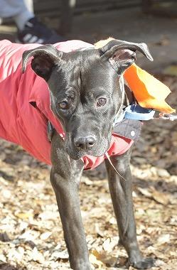 f:id:dog_life_saving:20181225150025j:image