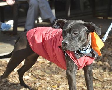 f:id:dog_life_saving:20181225150026j:image