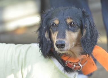 f:id:dog_life_saving:20181225150030j:image