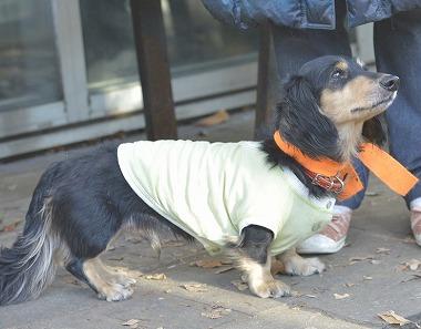 f:id:dog_life_saving:20181225150032j:image