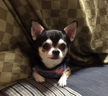 f:id:dog_life_saving:20181226144946j:image