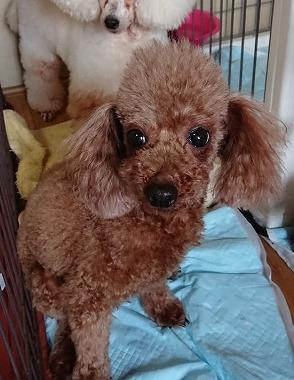 f:id:dog_life_saving:20181226150102j:image