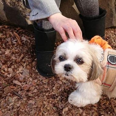 f:id:dog_life_saving:20190222131915j:plain