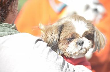 f:id:dog_life_saving:20190320142849j:plain