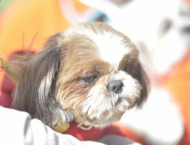 f:id:dog_life_saving:20190320142942j:plain