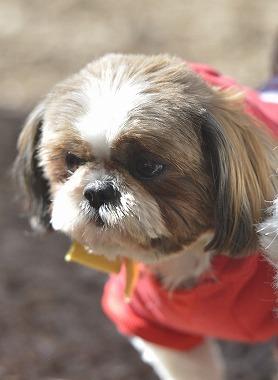 f:id:dog_life_saving:20190320142954j:plain