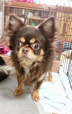 f:id:dog_life_saving:20190412133900j:plain