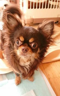 f:id:dog_life_saving:20190412133945j:plain