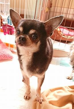f:id:dog_life_saving:20190412140544j:plain