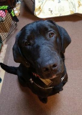 f:id:dog_life_saving:20190412141802j:plain