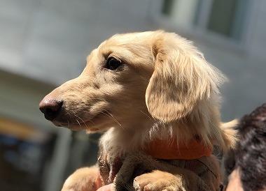 f:id:dog_life_saving:20190423134257j:plain