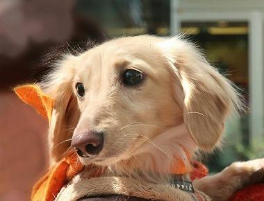 f:id:dog_life_saving:20190423134308j:plain