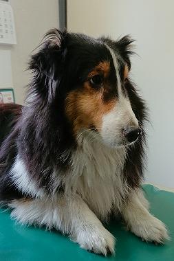 f:id:dog_life_saving:20190423142646j:plain