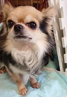 f:id:dog_life_saving:20190423142740j:plain