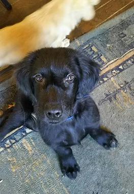 f:id:dog_life_saving:20190423142917j:plain