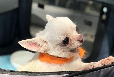 f:id:dog_life_saving:20190423144535j:plain