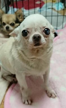f:id:dog_life_saving:20190423144602j:plain
