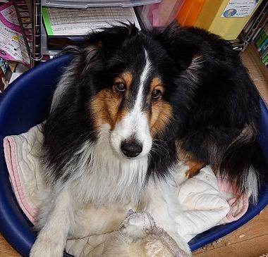 f:id:dog_life_saving:20190507140648j:plain
