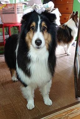 f:id:dog_life_saving:20190507140659j:plain