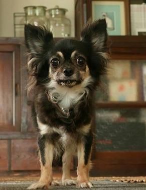 f:id:dog_life_saving:20190607132435j:plain