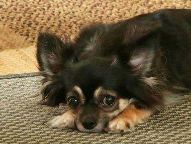 f:id:dog_life_saving:20190607132444j:plain