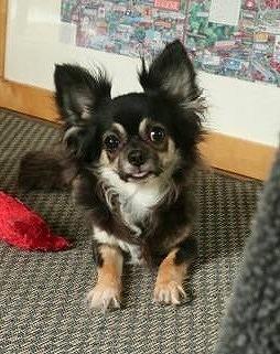 f:id:dog_life_saving:20190607132452j:plain