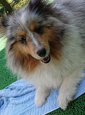 f:id:dog_life_saving:20190717145123j:plain