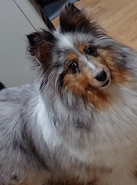 f:id:dog_life_saving:20190717145130j:plain