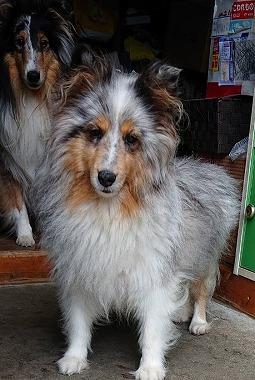 f:id:dog_life_saving:20190717145145j:plain
