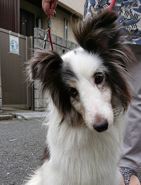 f:id:dog_life_saving:20190717145209j:plain